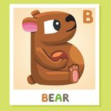B is for Bear. Letter B. Bear, cute illustration. Animal alphabet. Royalty Free Stock Images