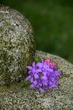 Bąbel Rockowa fontanna z purpurowymi kwiatami Fotografia Royalty Free