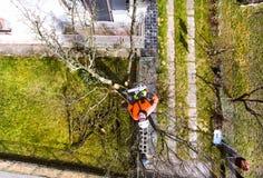 Bûcheron avec l'élagage de tronçonneuse et de harnais un arbre photo libre de droits