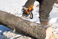 Bûcheron avec l'arbre de coupe de tronçonneuse Photos libres de droits