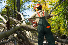 Bûcheron luttant contre le sous-bois dans la forêt Photographie stock libre de droits