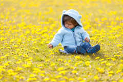 B in the field with  spring flowers Royalty Free Stock Images
