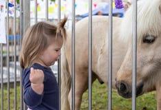 B?b? Fille regarder mignon Poney zoo photos libres de droits