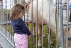 B?b? Fille regarder Poney mignon zoo photo stock