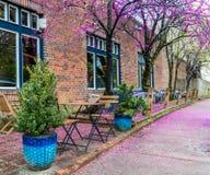 B??kit?w krzes?a przy restauracj? z pi?knymi kwiatono?nymi drzewami i st?? zdjęcie royalty free