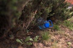 B??kitny du?y plastikowy butelki lying on the beach na ziemi w drzewie w parkowym lesie grat i zanieczyszczenie - Zrzuconym za pr zdjęcie stock