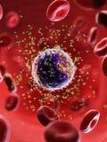 B komórka, niweczniki i ilustracja wektor