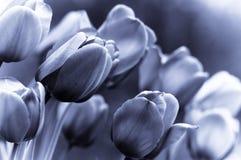 b kwiaty w stonowany tła Fotografia Royalty Free