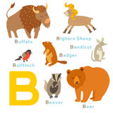 B letter animals set. English alphabet. Stock Images