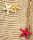 Błogie rozgwiazdy na piasku Zdjęcie Royalty Free