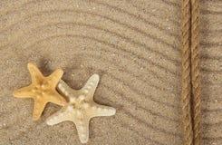 Błogie rozgwiazdy na piasku Obrazy Royalty Free