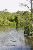 błot Florida bagno Zdjęcia Stock