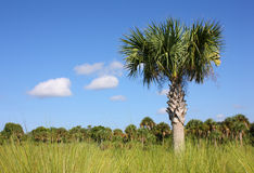 błota Florida Obrazy Stock