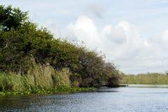 Błota mangrowe Zdjęcie Stock