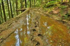 Błotnista droga w Carpathians Lasowych Obraz Royalty Free
