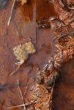 Błoto i rdza Zdjęcie Stock