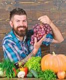 B?rtiger Kerl des Landwirts mit selbstgezogener Ernte auf Tabellengrifftrauben Der Landwirt, der auf Trauben stolz ist, ernten di stockfoto