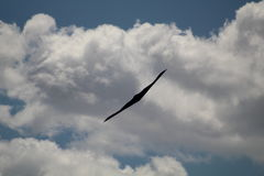 B-2 Stealth Bomber Head On. A B-2 Spirit Stealth Bomber Royalty Free Stock Photos