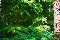 B?ume des Waldes Gr?ne h?lzerne Sonnenlichthintergr?nde der Natur stockfotografie