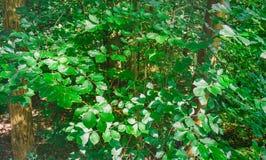 B?ume des Waldes Gr?ne h?lzerne Sonnenlichthintergr?nde der Natur stockfotos