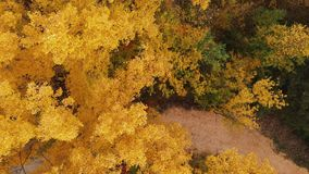 B?ume, die noch mit etwas goldenen Farben gr?n bleiben Fliegen ?ber den bunten Treetops an einem sonnigen Tag Herbstb?ume in der  stock footage