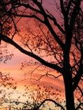 <b>Una qué noche doloroso colorida</b> Fotografía de archivo