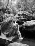 B&W瀑布在森林 库存照片