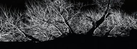 B&W abstrakta zima Obraz Stock