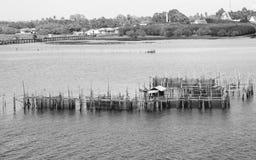 B&W-Bild von riesigen Blockierfischen in der Chanthaburi-Provinz, Thailand Lizenzfreie Stockfotos