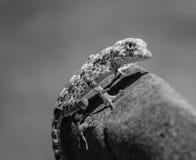B&W-djurliv Fotografering för Bildbyråer