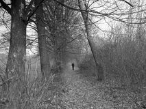B/W forest - man Royalty Free Stock Image
