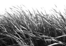 B/W gras tegen Wit Royalty-vrije Stock Afbeeldingen