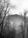 A B&W Great Smoky Mountains Forest Wintry Scene. A B&W early morning hazy wintry view of The Great Smoky Mountains forest trees Royalty Free Stock Photos