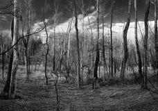 B&W-Holz Stockfoto