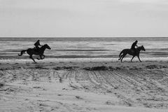 B/W Horses on the beach Royalty Free Stock Images