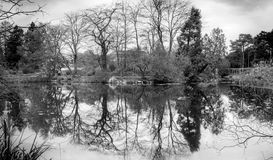 B&W long exposure panorama landscape of water reflection of trees Royalty Free Stock Photo