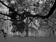 B/W mgłowy las zdjęcia royalty free