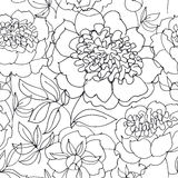 B/w peony floral sketch. spring flower Royalty Free Stock Photo