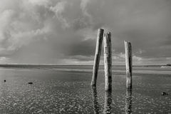 B&W of posts in water. Royalty Free Stock Photography