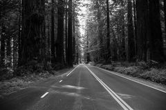 B&W Redwood Highway Stock Images