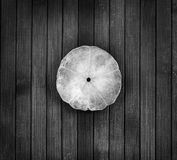 B&W seashell. Stock Photos