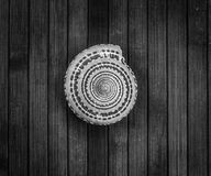 B&W seashell. Royalty Free Stock Photos