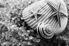 B&W seashells. High contrast monochrome image of big seashell on a seasalt Stock Images