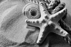 B&W seastar. Stock Images