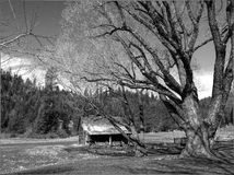 B&W of small barn and trees. Royalty Free Stock Image