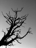 B&W Tree Sillhouette. Black and white tree sillhouette against a grey sky Stock Photo