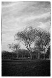 B&W trees Royalty Free Stock Images