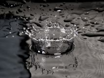 B&W water drop splash crown Royalty Free Stock Photo