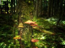 Błyszczka las Obraz Royalty Free