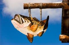 Baß-Fisch-Hängen Lizenzfreie Stockfotos